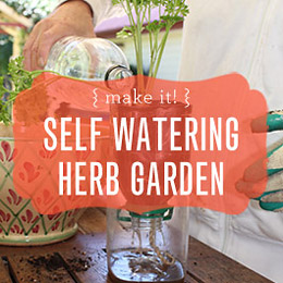Reusing Our Plastic: Self-Watering Herb Garden