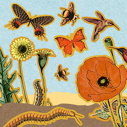 Make Nice Mission: Pollinator Placemat