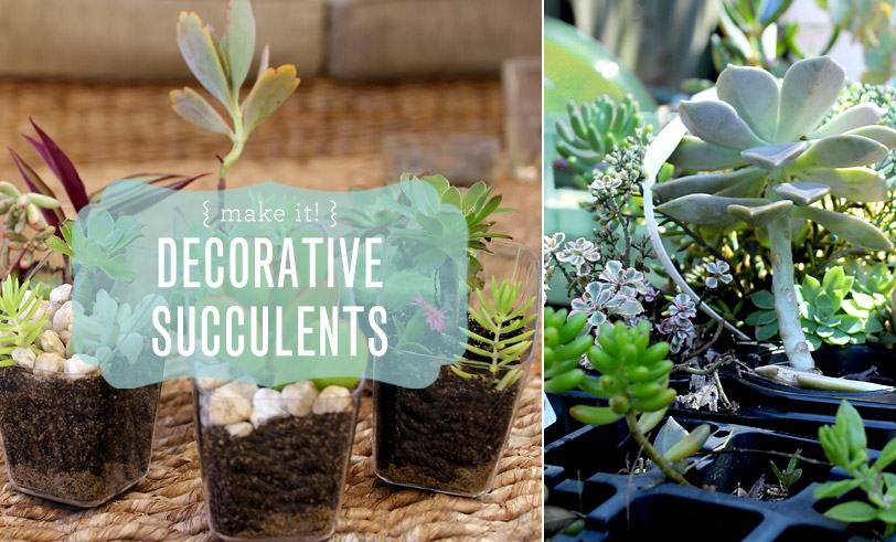 Reusing Our Plastic: Decorative Succulents