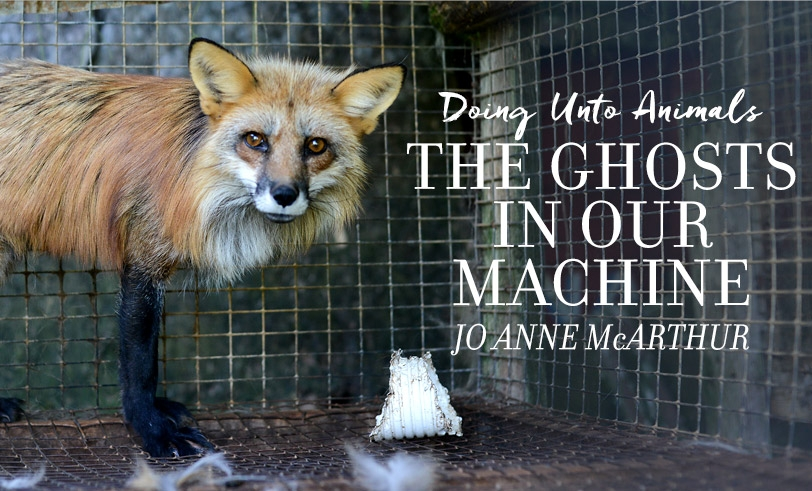 Doing Unto Animals: Jo-Anne McArthur