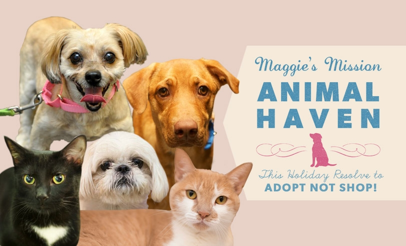 Maggie's Mission: Animal Haven, Holiday Edition