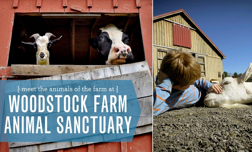 Woodstock FARM Animal Sanctuary: Meet The Animals