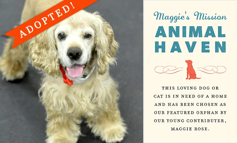 Maggie's Mission: Animal Haven
